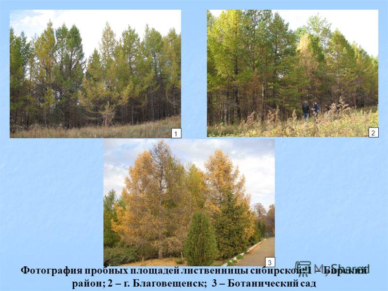 Фотография пробных площадей лиственницы сибирской: 1 – Бирский район; 2 – г. Благовещенск; 3 – Ботанический сад 1 2 3