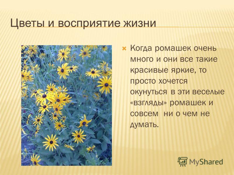 Цветы и восприятие жизни Когда ромашек очень много и они все такие красивые яркие, то просто хочется окунуться в эти веселые «взгляды» ромашек и совсем ни о чем не думать.