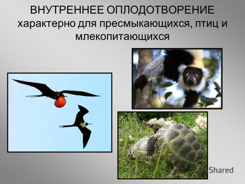 ВНУТРЕННЕЕ ОПЛОДОТВОРЕНИЕ характерно для пресмыкающихся, птиц и млекопитающихся