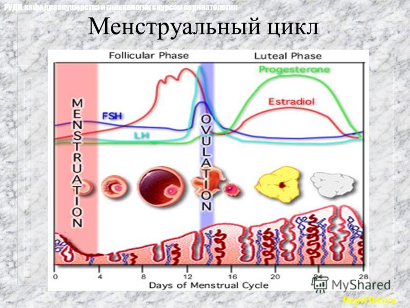 Менструальный цикл РУДН, кафедра акушерства и гинекологии с курсом перинатологии DeptObGyn