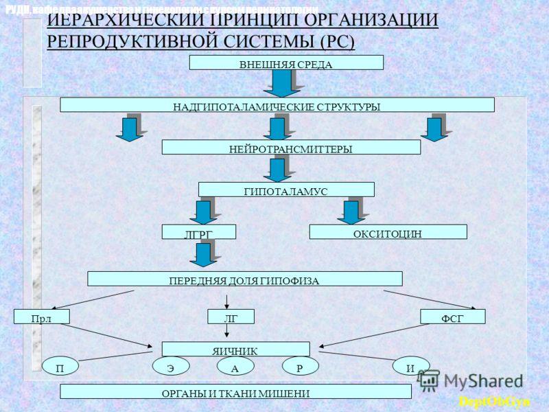 ИЕРАРХИЧЕСКИЙ ПРИНЦИП ОРГАНИЗАЦИИ РЕПРОДУКТИВНОЙ СИСТЕМЫ (РС) ВНЕШНЯЯ СРЕДА НАДГИПОТАЛАМИЧЕСКИЕ СТРУКТУРЫ НЕЙРОТРАНСМИТТЕРЫ ГИПОТАЛАМУС ЛГРГ ОКСИТОЦИН ПЕРЕДНЯЯ ДОЛЯ ГИПОФИЗА ЯИЧНИК ОРГАНЫ И ТКАНИ МИШЕНИ ПрлЛГФСГ ПЭАРИ РУДН, кафедра акушерства и гинек