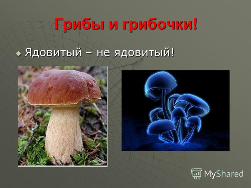 Грибы и грибочки! Ядовитый – не ядовитый! Ядовитый – не ядовитый!