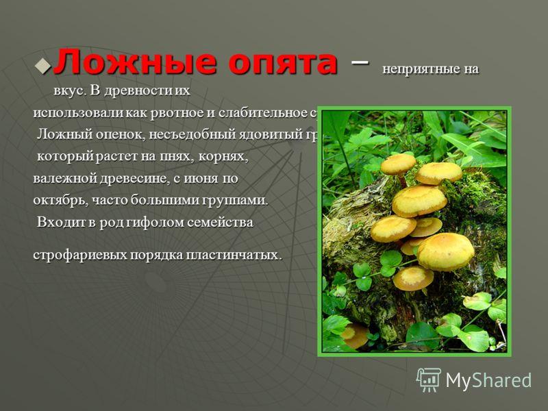 Ложные опята – неприятные на вкус. В древности их Ложные опята – неприятные на вкус. В древности их использовали как рвотное и слабительное средство. Ложный опенок, несъедобный ядовитый гриб, Ложный опенок, несъедобный ядовитый гриб, который растет н