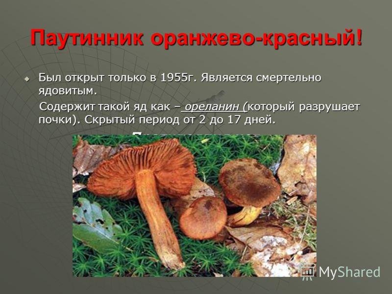 Паутинник оранжево-красный! Был открыт только в 1955г. Является смертельно ядовитым. Был открыт только в 1955г. Является смертельно ядовитым. Содержит такой яд как – ореланин (который разрушает почки). Скрытый период от 2 до 17 дней. Содержит такой я