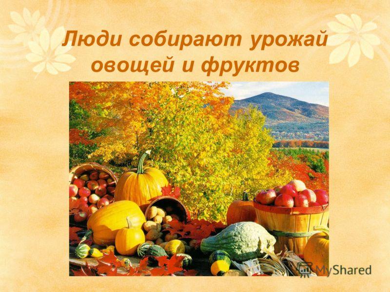 Люди собирают урожай овощей и фруктов