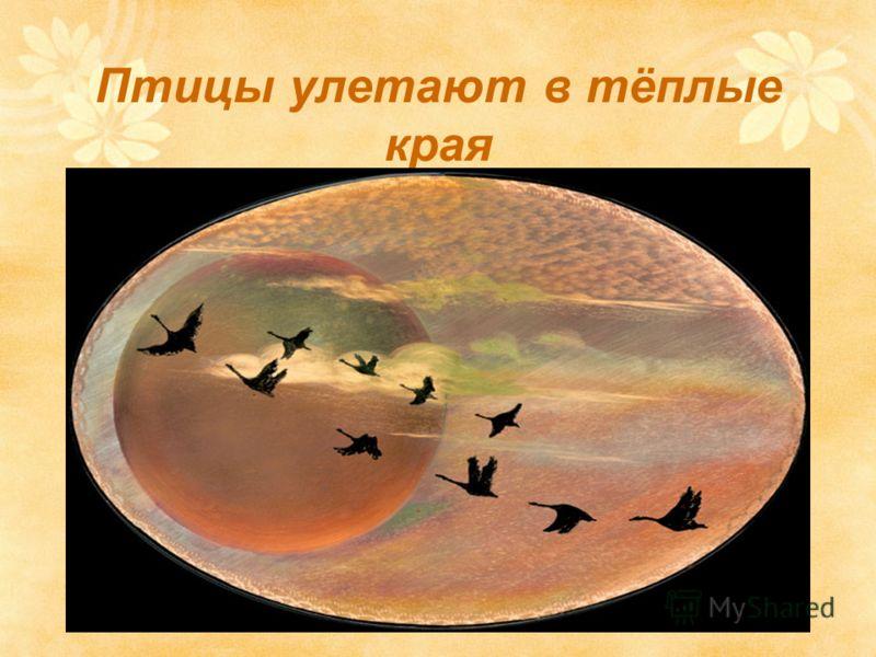 Птицы улетают в тёплые края