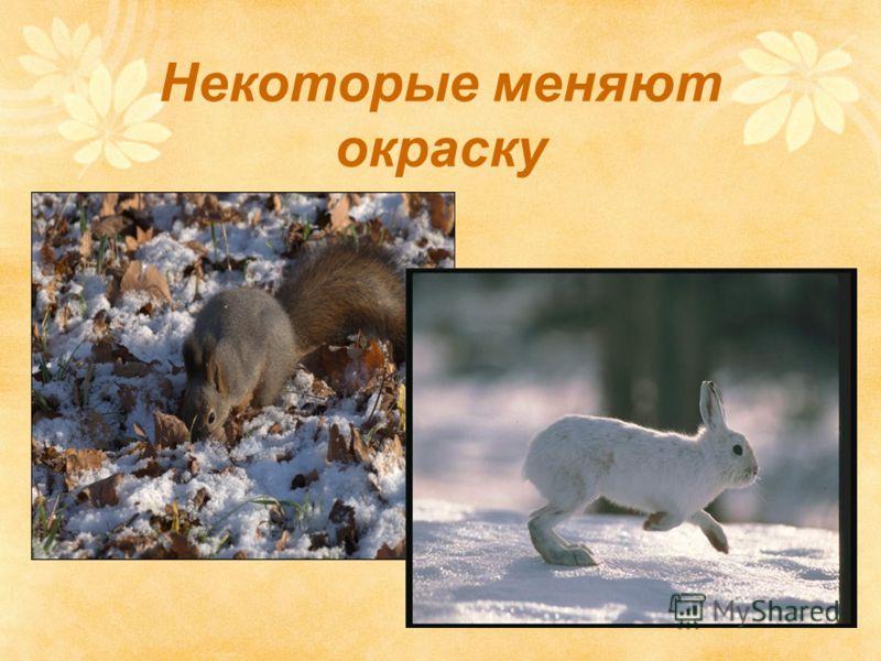 Животные тоже готовятся к зиме Некоторые меняют окраску