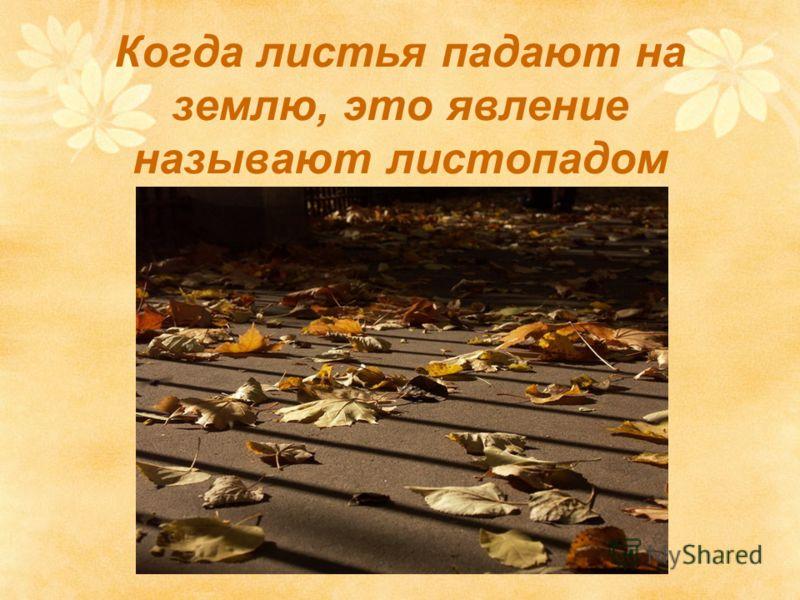 Когда листья падают на землю, это явление называют листопадом