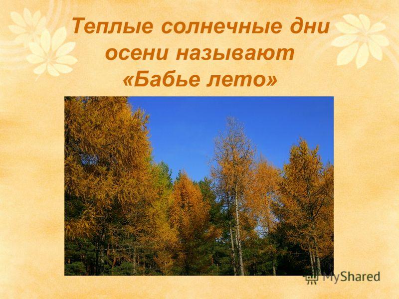 Теплые солнечные дни осени называют «Бабье лето»