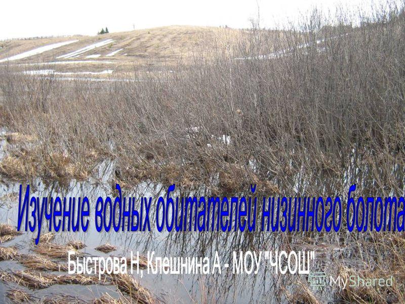Обитатели пойменного болота