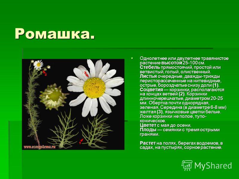 Ромашка. Однолетнее или двулетнее травянистое растение высотой 25-100 см. Стебель прямостоячий, простой или ветвистый, голый, олиственный. Листья очередные, дважды-трижды перисторассеченные на нитевидные, острые, бороздчатые снизу доли (1). Соцветия