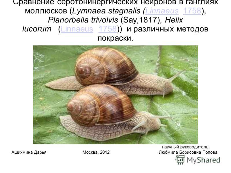 Сравнение серотонинергических нейронов в ганглиях моллюсков (Lymnaea stagnalis (Linnaeus 1758), Planorbella trivolvis (Say,1817), Helix lucorum (Linnaeus 1758)) и различных методов покраски.Linnaeus1758Linnaeus1758 научный руководитель: Ашихмина Дарь