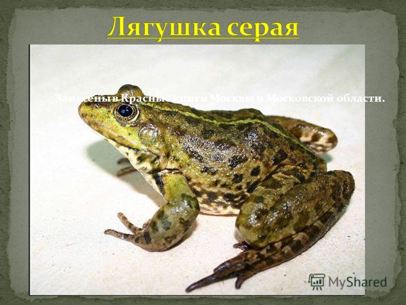 Занесены в Красные книги Москвы и Московской области.