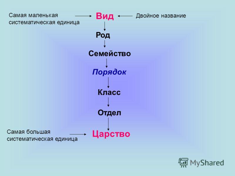 Вид Род Семейство Порядок Класс Отдел Царство Самая маленькая систематическая единица Самая большая систематическая единица Двойное название