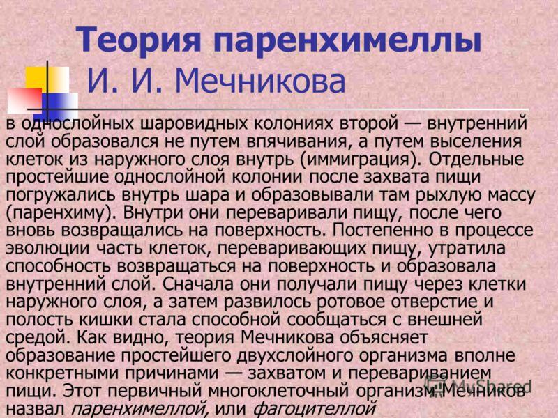 Теория паренхимеллы И. И. Мечникова в однослойных шаровидных колониях второй внутренний слой образовался не путем впячивания, а путем выселения клеток из наружного слоя внутрь (иммиграция). Отдельные простейшие однослойной колонии после захвата пищи