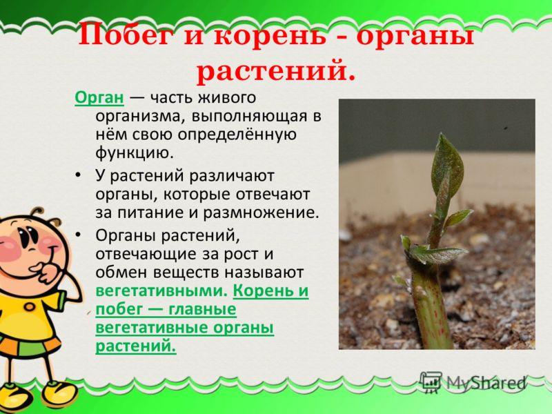 Мир растений огромен и удивителен. Разнообразие растений по их строению: талломный, при котором отдельные органы не выделяются и тело представляет собой зелёную пластину (некоторые мохообразные, заростки папоротников) – НИЗШИЕ РАСТЕНИЯ листостебельны