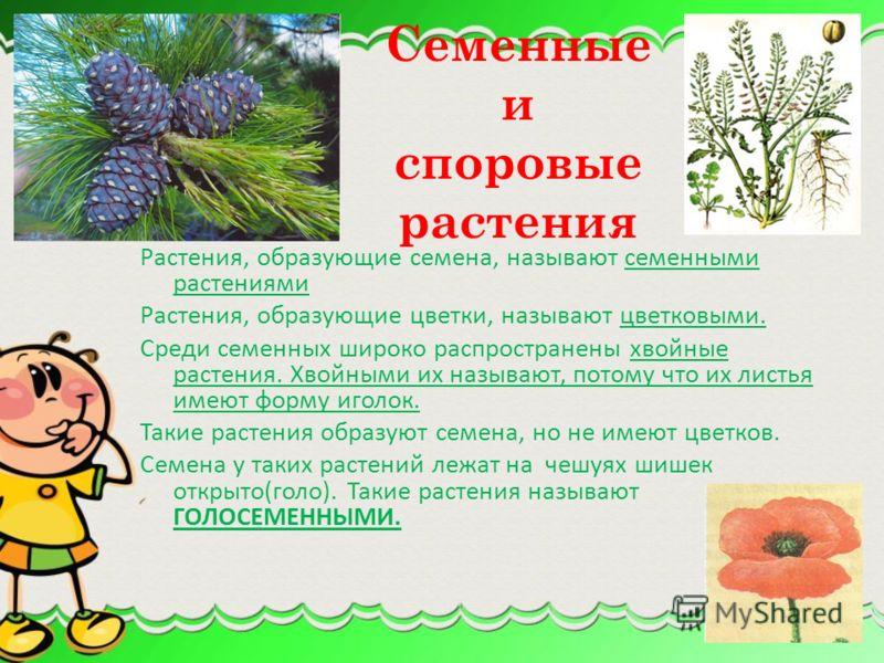 Помимо вегетативных органов у растения есть также органы, отвечающие за половое размножение растений. Их называют генеративными органами. Это цветок, образующийся из него плод, а также находящиеся в нём семена. В генеративных органах образуются особы