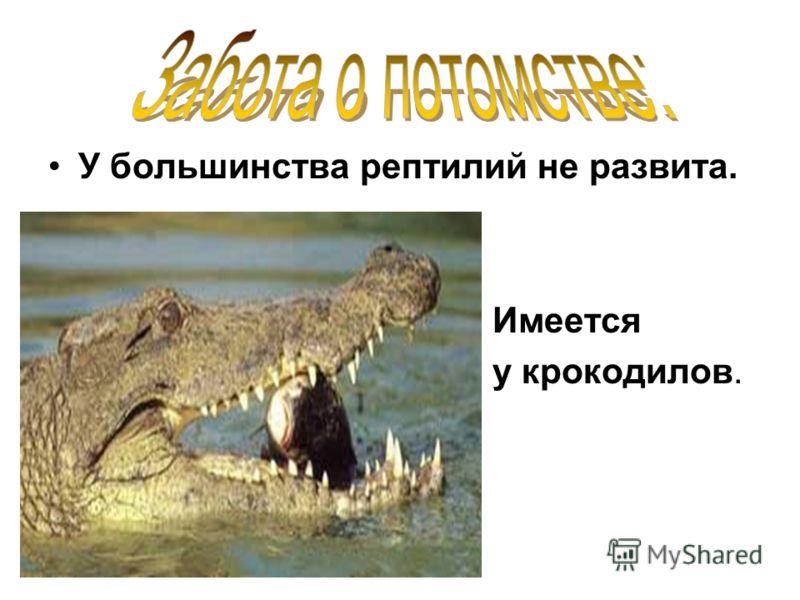 У большинства рептилий не развита. Имеется у крокодилов.