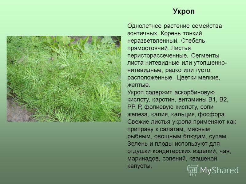 Укроп Однолетнее растение семейства зонтичных. Корень тонкий, неразветвленный. Стебель прямостоячий. Листья перисторассеченные. Сегменты листа нитевидные или утолщенно- нитевидные, редко или густо расположенные. Цветки мелкие, желтые. Укроп содержит