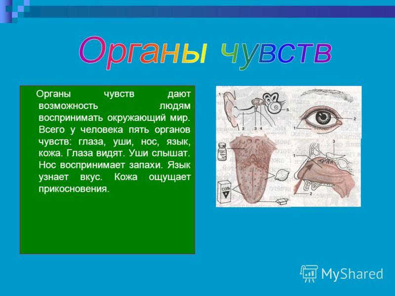 Органы чувств дают возможность людям воспринимать окружающий мир. Всего у человека пять органов чувств: глаза, уши, нос, язык, кожа. Глаза видят. Уши слышат. Нос воспринимает запахи. Язык узнает вкус. Кожа ощущает прикосновения.