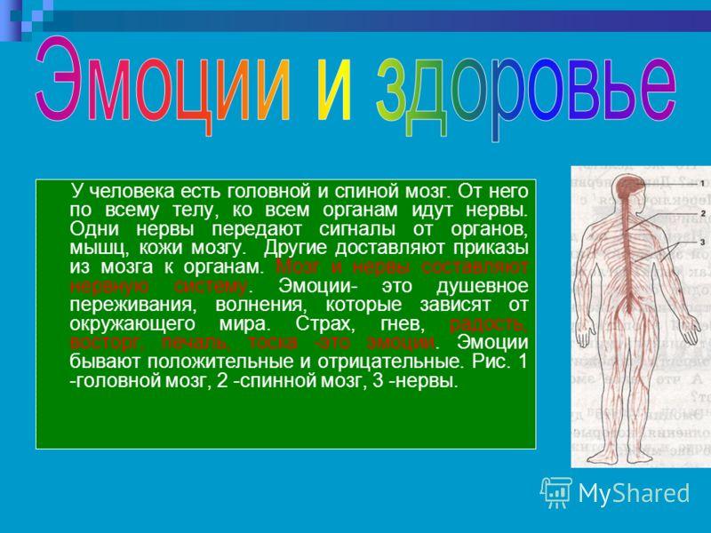 У человека есть головной и спиной мозг. От него по всему телу, ко всем органам идут нервы. Одни нервы передают сигналы от органов, мышц, кожи мозгу. Другие доставляют приказы из мозга к органам. Мозг и нервы составляют нервную систему. Эмоции- это ду