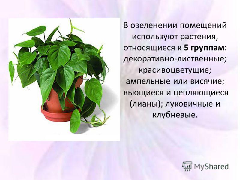 В озеленении помещений используют растения, относящиеся к 5 группам: декоративно-лиственные; красивоцветущие; ампельные или висячие; вьющиеся и цепляющиеся (лианы); луковичные и клубневые.