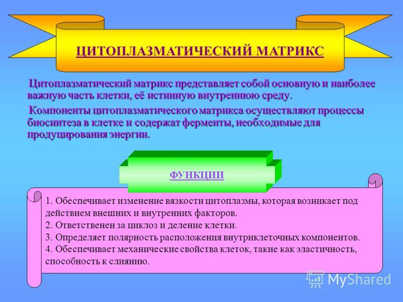 Цитоплазматический матрикс представляет собой основную и наиболее важную часть клетки, её истинную внутреннюю среду. Цитоплазматический матрикс представляет собой основную и наиболее важную часть клетки, её истинную внутреннюю среду. Компоненты цитоп