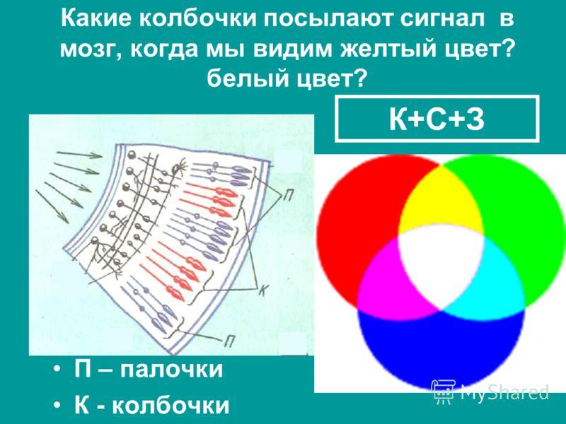 Какие колбочки посылают сигнал в мозг, когда мы видим желтый цвет? белый цвет? П – палочки К - колбочки К+С+З