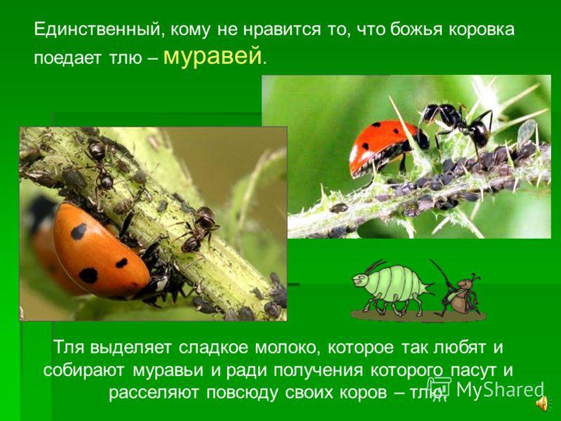 Тля размножается очень быстро. Учёные считают, что если бы выживало потомство только одного вида тли, то и тогда на земле не осталось не только растений, но и ничего живого. Один жучок божьей коровки уничтожает за день до 200 насекомых. Так что недар