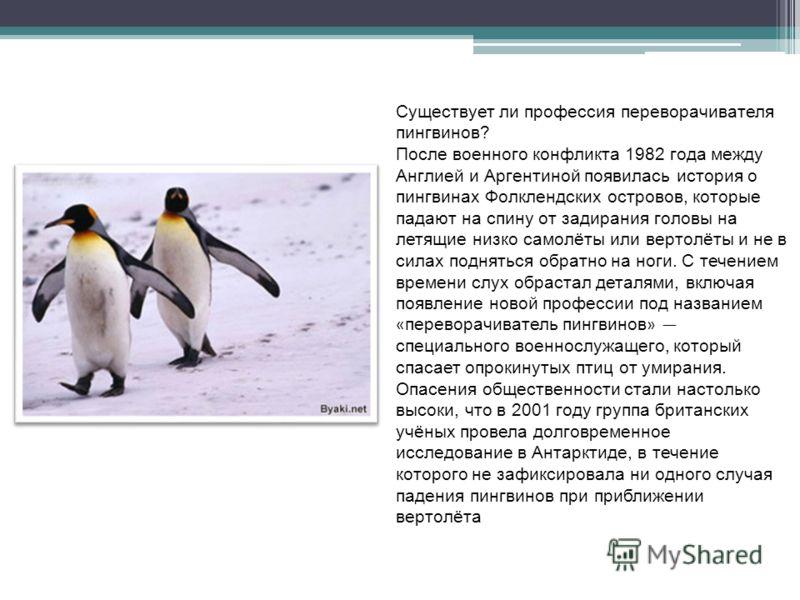 Существует ли профессия переворачивателя пингвинов? После военного конфликта 1982 года между Англией и Аргентиной появилась история о пингвинах Фолклендских островов, которые падают на спину от задирания головы на летящие низко самолёты или вертолёты