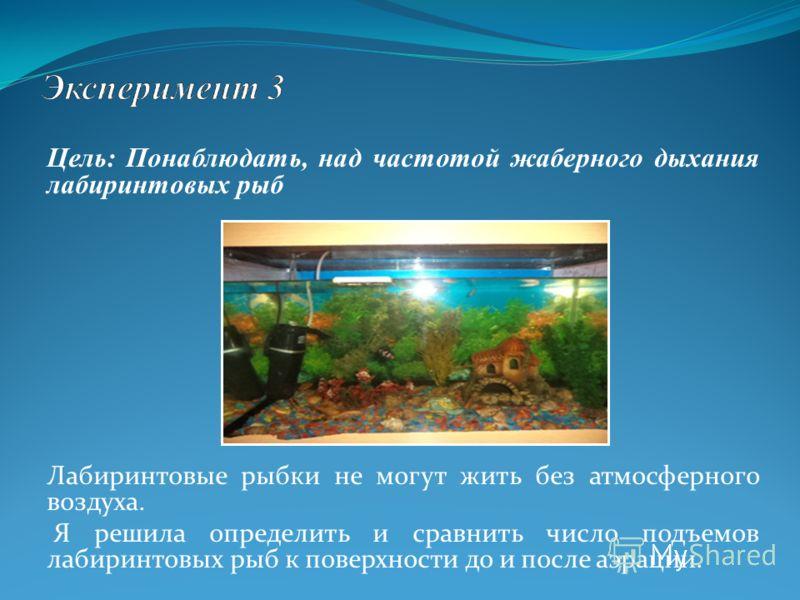 Цель: Понаблюдать, над частотой жаберного дыхания лабиринтовых рыб Лабиринтовые рыбки не могут жить без атмосферного воздуха. Я решила определить и сравнить число подъемов лабиринтовых рыб к поверхности до и после аэрации.