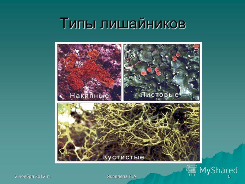 2 ноября 2012 г.2 ноября 2012 г.2 ноября 2012 г.2 ноября 2012 г. Яковлева Л.А. 6 Типы лишайников