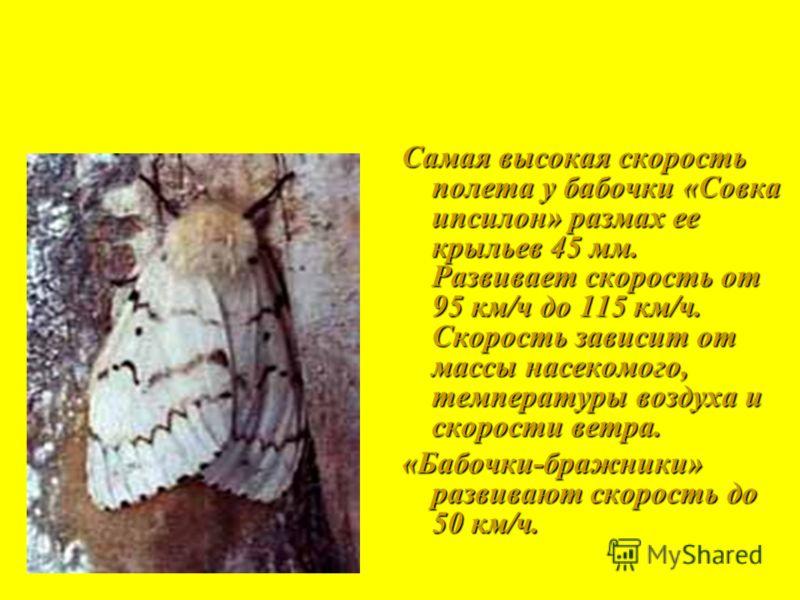 Самая высокая скорость полета у бабочки «Совка ипсилон» размах ее крыльев 45 мм. Развивает скорость от 95 км/ч до 115 км/ч. Скорость зависит от массы насекомого, температуры воздуха и скорости ветра. «Бабочки-бражники» развивают скорость до 50 км/ч.