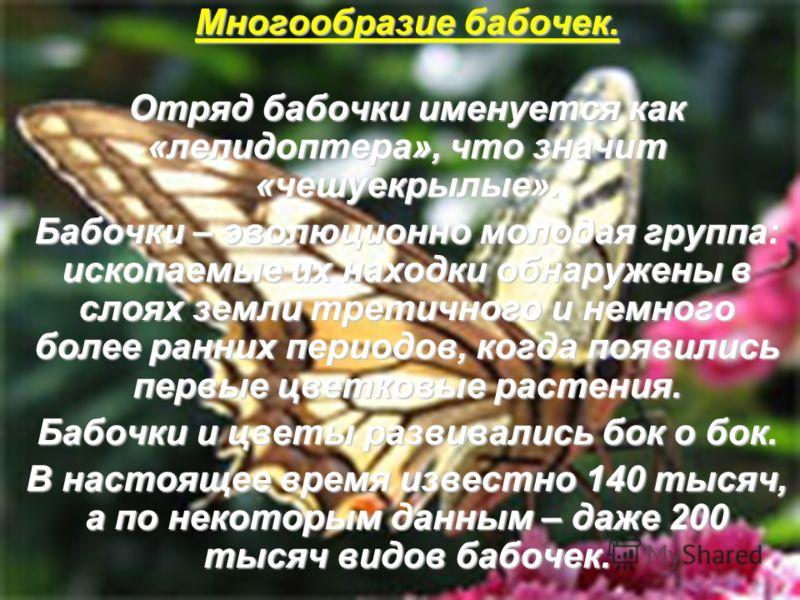 Многообразие бабочек. Отряд бабочки именуется как «лепидоптера», что значит «чешуекрылые». Бабочки – эволюционно молодая группа: ископаемые их находки обнаружены в слоях земли третичного и немного более ранних периодов, когда появились первые цветков