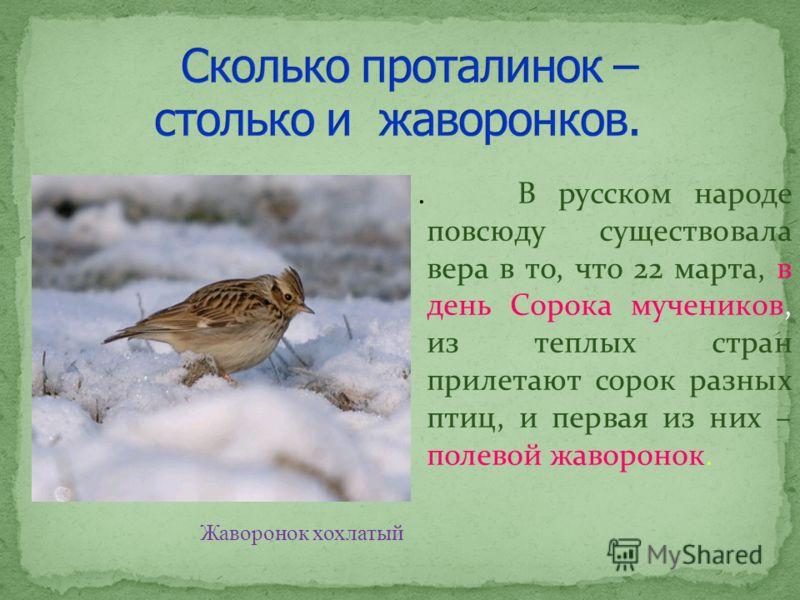 . В русском народе повсюду существовала вера в то, что 22 марта, в день Сорока мучеников, из теплых стран прилетают сорок разных птиц, и первая из них – полевой жаворонок. Жаворонок хохлатый