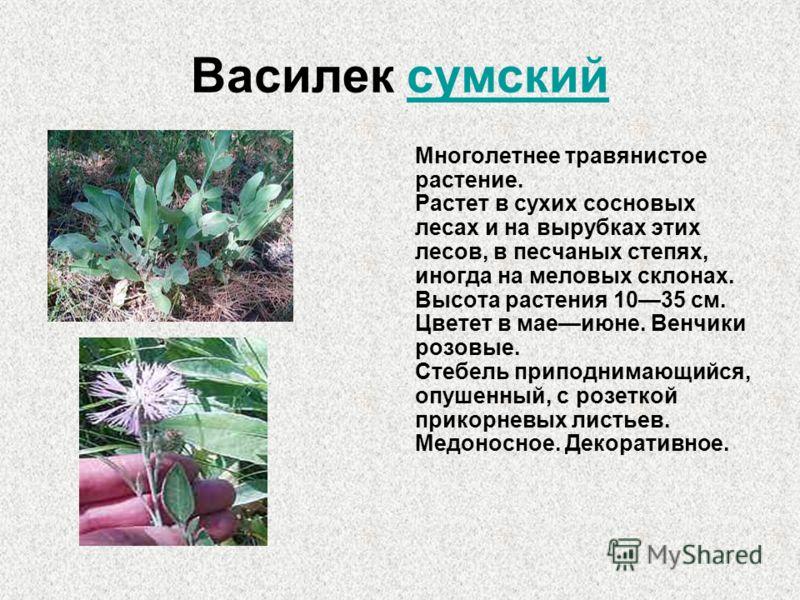 Василек сумский Многолетнее травянистое растение. Растет в сухих сосновых лесах и на вырубках этих лесов, в песчаных степях, иногда на меловых склонах. Высота растения 1035 см. Цветет в маеиюне. Венчики розовые. Стебель приподнимающийся, опушенный, с