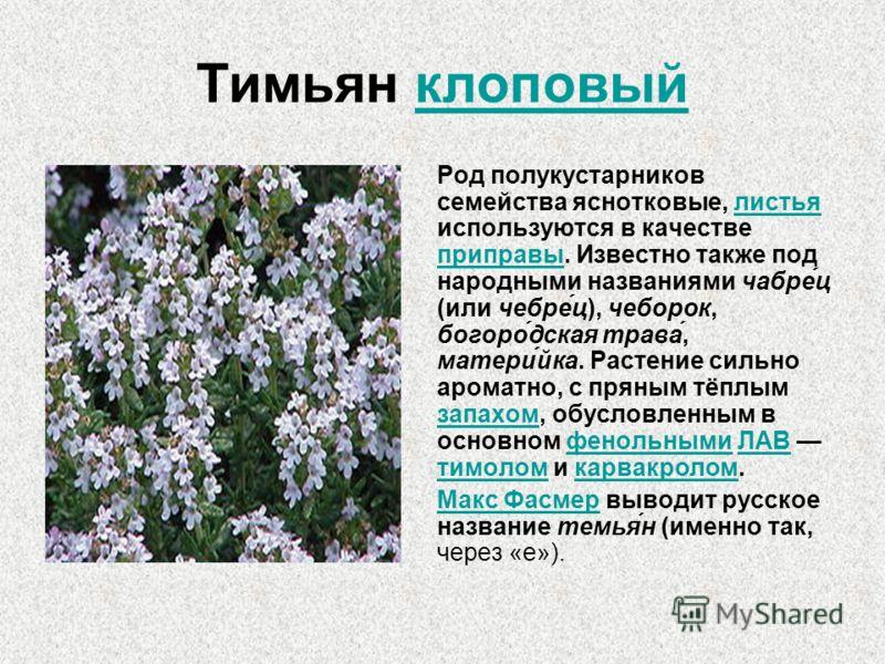 Тимьян клоповый Род полукустарников семейства яснотковые, листья используются в качестве приправы. Известно также под народными названиями чабре́ц (или чебре́ц), чеборок, богоро́дская трава́, матери́йка. Растение сильно ароматно, с пряным тёплым запа