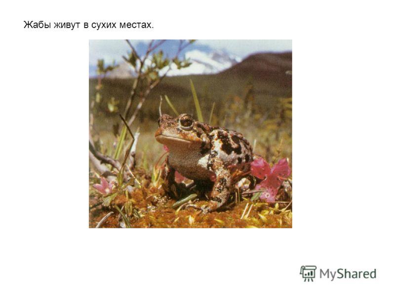 Древесные лягушки живут на деревьях во влажных тропических лесах.