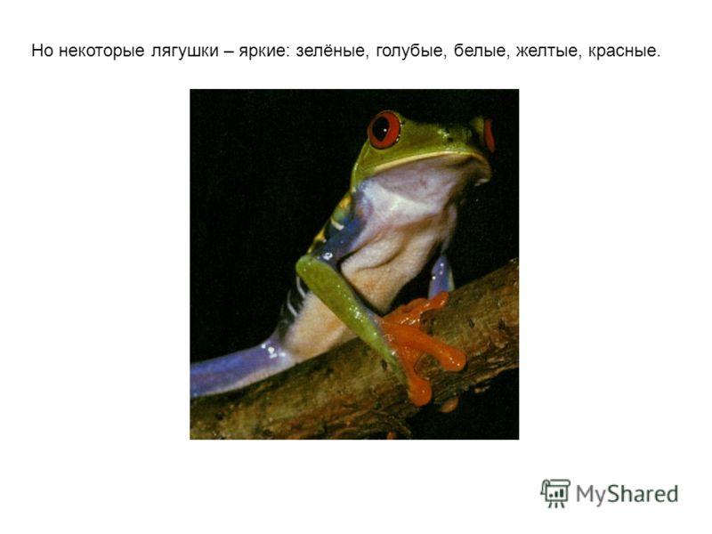 Йосемитская жаба