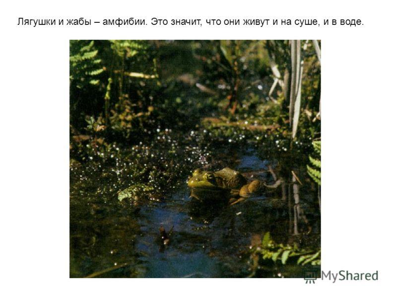 … а лягушки - маленькие. Little Grass Frog