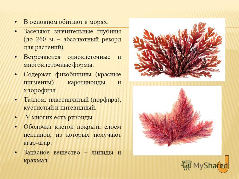 В основном обитают в морях. Заселяют значительные глубины (до 260 м – абсолютный рекорд для растений). Встречаются одноклеточные и многоклеточные формы. Содержат фикобилины (красные пигменты), каротиноиды и хлорофилл. Таллом: пластинчатый (порфира),