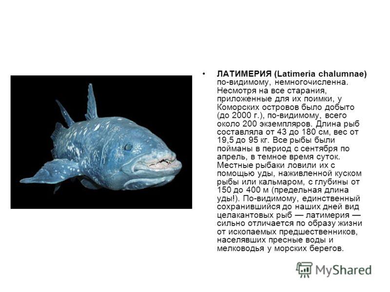 ЛАТИМЕРИЯ (Latimeria chalumnae) по-видимому, немногочисленна. Несмотря на все старания, приложенные для их поимки, у Коморских островов было добыто (до 2000 г.), по-видимому, всего около 200 экземпляров. Длина рыб составляла от 43 до 180 см, вес от 1