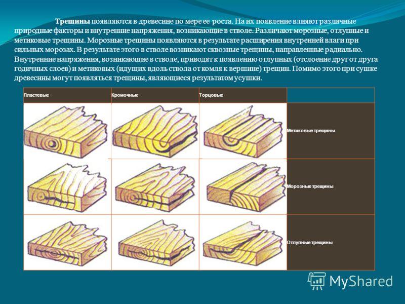 Трещины появляются в древесине по мере ее роста. На их появление влияют различные природные факторы и внутренние напряжения, возникающие в стволе. Различают морозные, отлупные и метиковые трещины. Морозные трещины появляются в результате расширения в