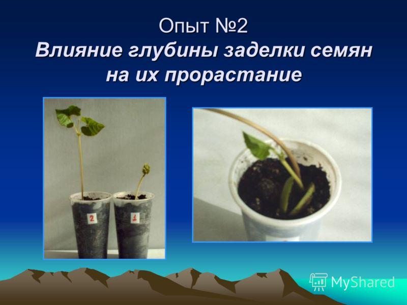 Опыт 2 Влияние глубины заделки семян на их прорастание