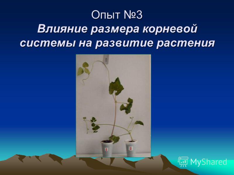 Опыт 3 Влияние размера корневой системы на развитие растения