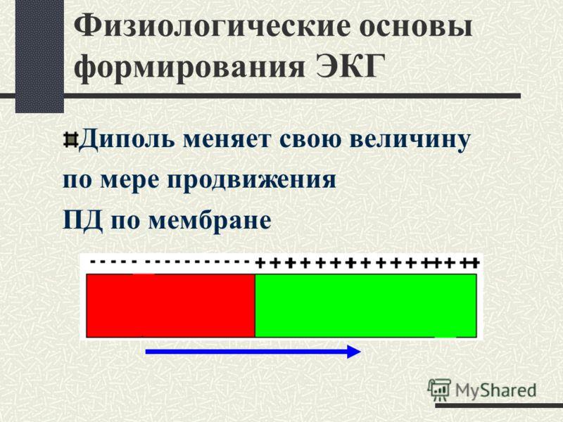 Физиологические основы формирования ЭКГ Диполь создает ЭДС – вектор, имеющий размерность и направление от минуса к плюсу