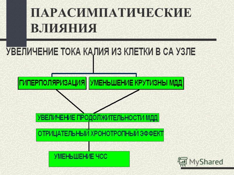 ПАРАСИМПАТИЧЕСКИЕ ВЛИЯНИЯ