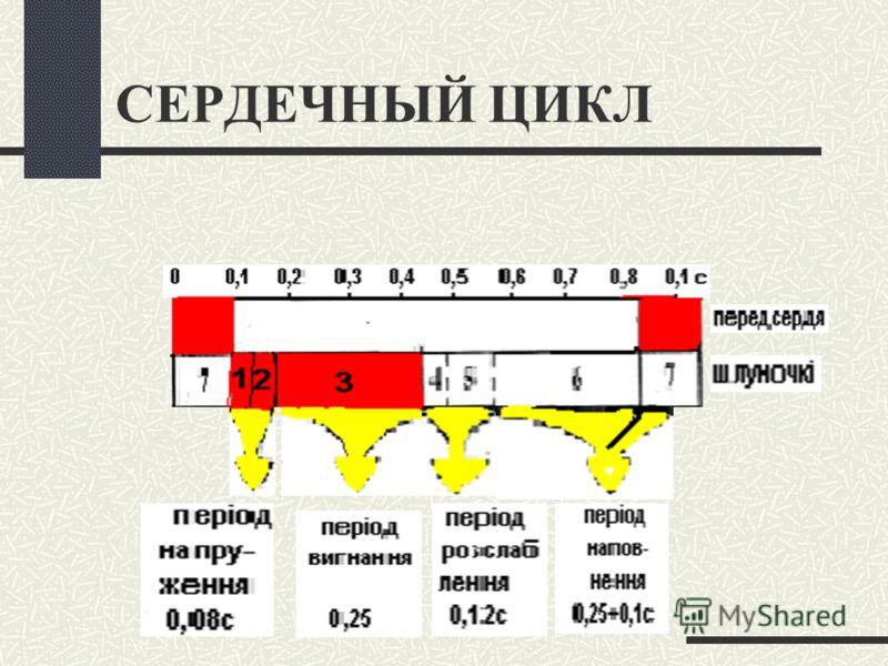 СЕРДЕЧНЫЙ ЦИКЛ И ТОНЫ СЕРДЦА Доц.к.мед.н. Тананакина Т.П.