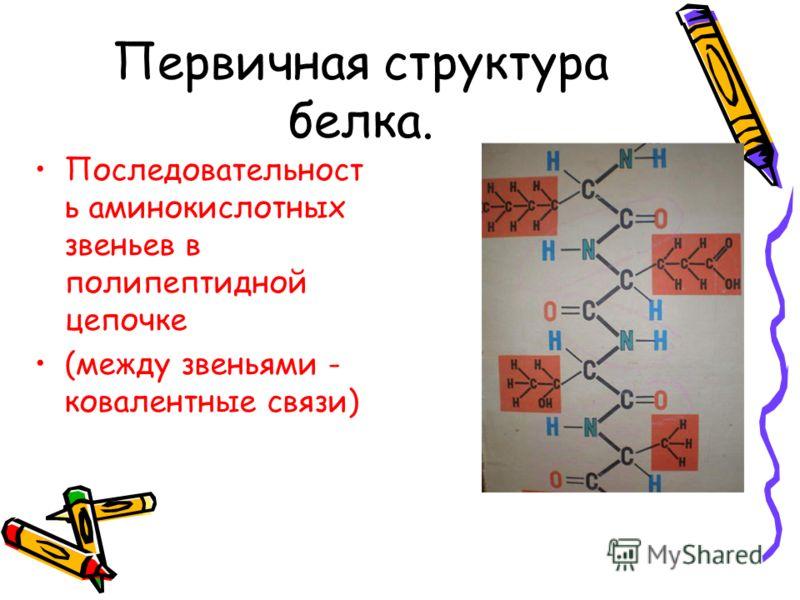 Первичная структура белка. Последовательност ь аминокислотных звеньев в полипептидной цепочке (между звеньями - ковалентные связи)