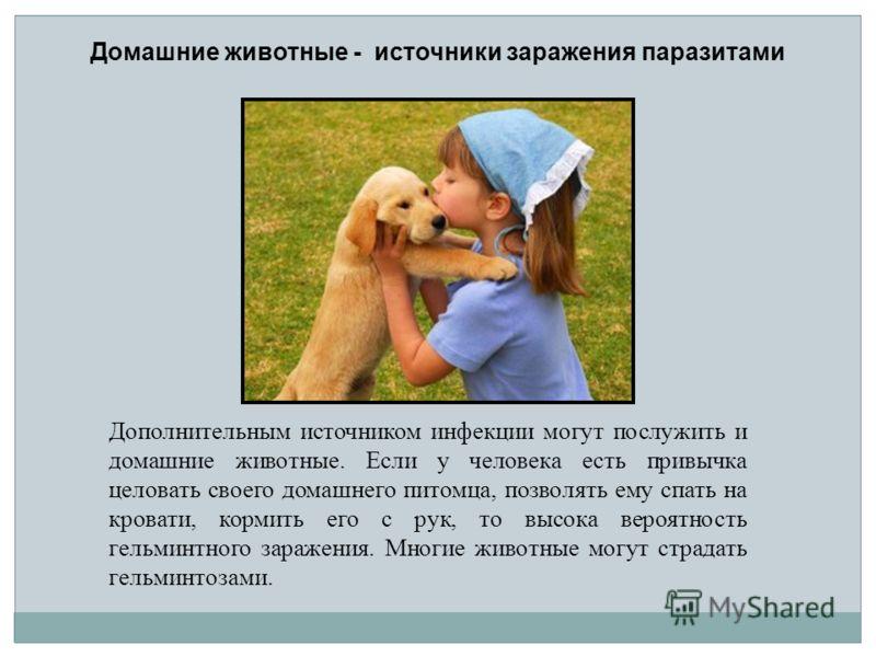 Дополнительным источником инфекции могут послужить и домашние животные. Если у человека есть привычка целовать своего домашнего питомца, позволять ему спать на кровати, кормить его с рук, то высока вероятность гельминтного заражения. Многие животные